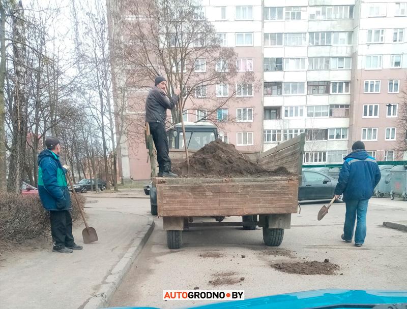 Ямы заделывают землей в Гродно